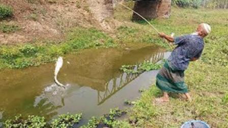 这爷爷站姿真是销魂,钓鱼还不忘姿势,不过鱼还是乖乖上钩