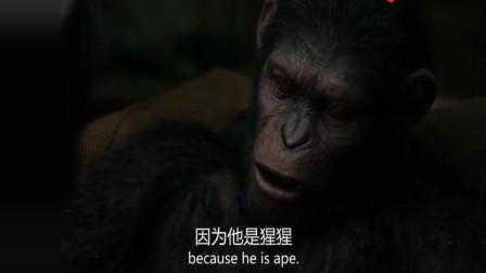 猩球崛起2:凯撒觉得猩猩比人类好,科巴教会他,两者其实很像