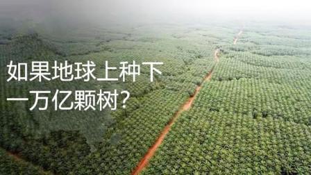 如果我们种下一万亿棵树,地球将会怎样?