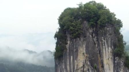 """贵州存在一棵天然""""大白菜"""",高达100多米,网友:这个猪不敢拱"""