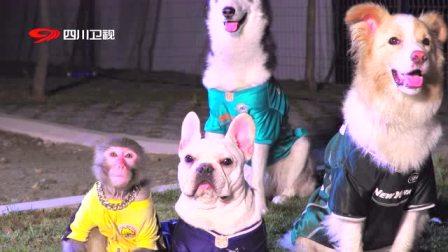 《宠物的秘密生活》第15期:动物趣味运动会