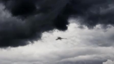 极限运动者在空中拍下神秘物种画面,网友:疑似狮鹫