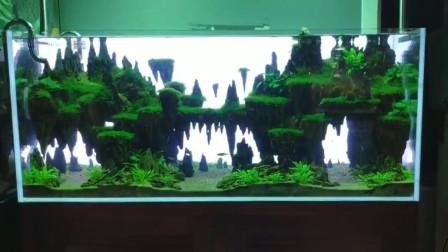 草缸制作,3天才完成,这样的鱼缸景观,5天做好也值了