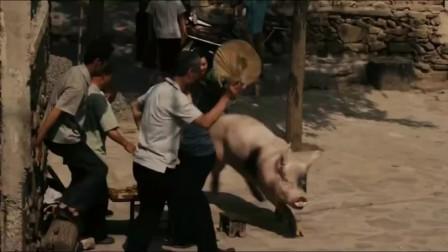 农村美女教训猪,把猪赶进死胡同,出来却大喊救命被村里人笑话