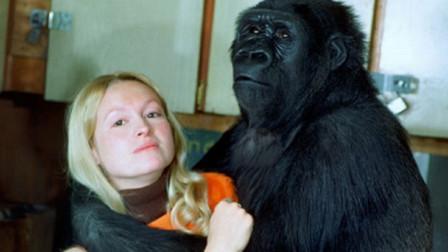 大猩猩和人类这么像,人和大猩猩能诞生后代吗?科学家做了实验!