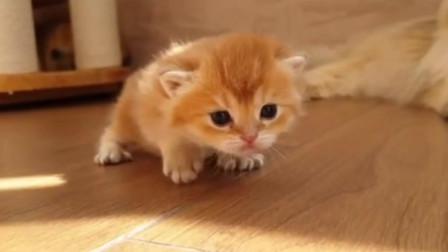 可爱的小猫咪,日常撸猫。