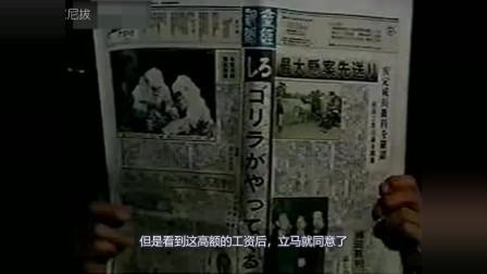 【拔叔】日本政府让男子扮演大猩猩,还给他高额工资,到底是为什么?