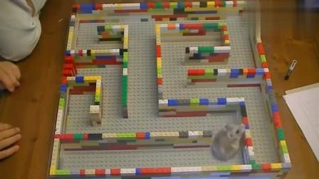 一个迷失在迷宫的小仓鼠,仓鼠:好吧,我认输了!