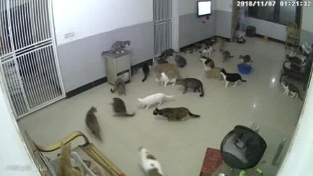 当猫咪救助站突然闯进一只耗子,它被集体围攻,空气都静止了!