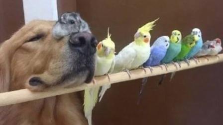 鹦鹉一旦说起话来,那可能真没语文老师什么事了,真的皮!