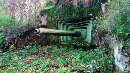 5个森林中最奇怪的发现,本不该出现的,却出现了!