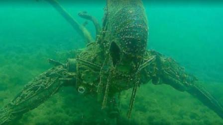 小伙海底发现神秘生物,巨型异形躺在海底
