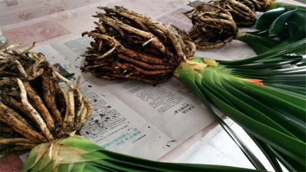 让盆栽根系发达的方法有哪些,分别是什么呢?今天算长见识了
