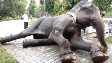 主人虐待了大象50年,当大象被救出之后,落下了解脱的泪水!