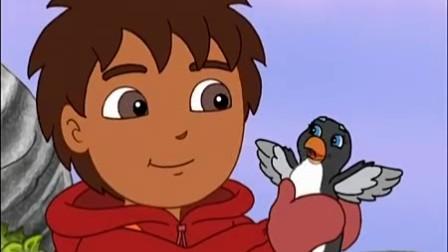 迪亚哥 第四季 海鹰宝宝们好可爱啊,迪亚哥带它们寻找美味的鱼