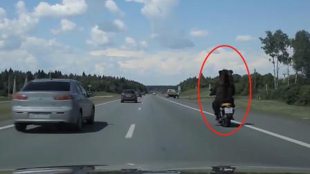 女子发现前面摩托车上驾驶员不对,靠近看清后懵了,这不会是只熊吧?