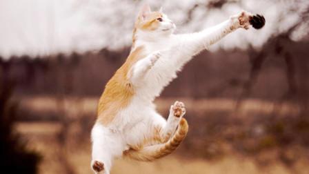 小奶猫:让在下给你跳个舞,舞狮算么?网友:萌坏了我的心