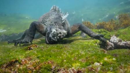 """男子深海潜水,称拍到""""哥斯拉"""",原来它就是哥斯拉原型!"""