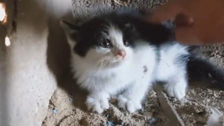 没有妈妈的流浪小猫,可爱又有点凶,饿坏了