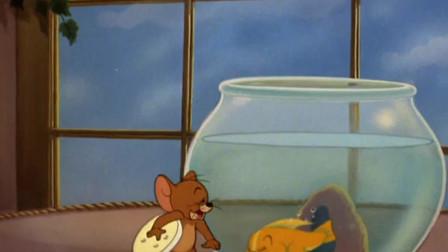 猫和老鼠:杰瑞带着一块饼干过来,小金鱼快起床吃饭饭了!