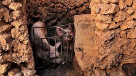 在云南,有一个三亿年前的村子,就连猪圈里的石头都是宝贝