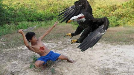 """小孩""""徒手""""抓老鹰,镜头拍下全过程,每个动作都令人匪夷所思!"""