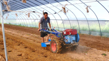 这才是甜瓜起垄种植最科学的做法,农民别再搞错了!快学学