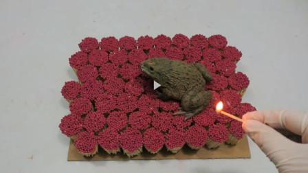 歪果仁真是脑洞大,10000只火柴烤青蛙,镜头拍下全过程!