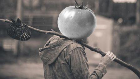 老番茄的流浪生活