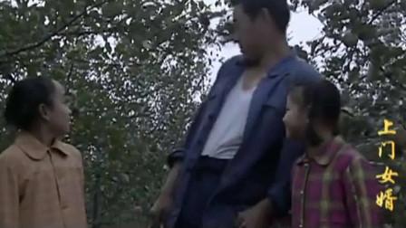上门女婿:一转眼两年过去,马四辈的苹果园硕果累累,看着两个女儿欣慰。