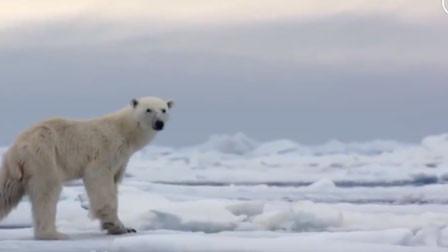 塑料已占领北极! 科学家:北极冰芯中发现塑料微颗粒
