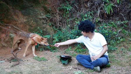狗子做坏事了,小伙做椒盐排骨气它,馋得狗子流口水