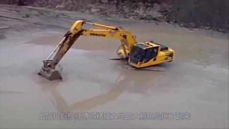 鳄鱼有多牛?在挖掘机面前不堪一击,像条鱼一样毫无还手之力