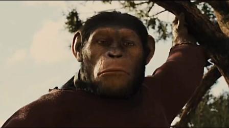 或许从这刻起,小猩猩凯撒就注定了不会成为人类的宠物,而是未来的凯撒大帝