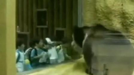 这才叫所谓的熊孩子