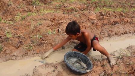 家里没肉下锅了,农村男孩提着水桶就出来抓鱼,看看抓了多少?