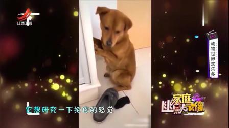 家庭幽默录像:狗狗犯错面壁思过,主人杀鸡儆狗,这眼神简直太委屈了