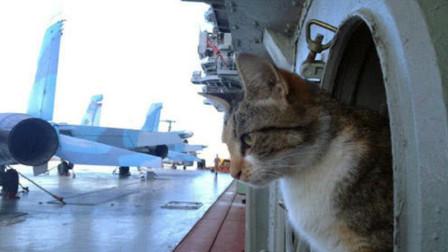 俄罗斯军舰上没有老鼠,却偏偏要养一只猫?原来竟有这么多小心思