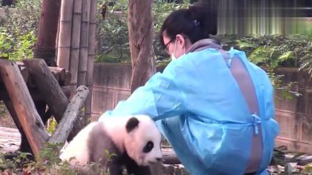 熊猫:帅熊小灰灰开始撩妹了,自己把头伸过来讨摸
