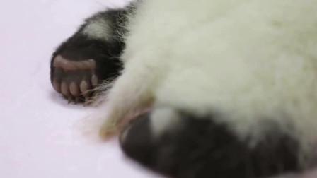 熊猫:如果视频能有味道,那一定是瓶瓶奶的香味