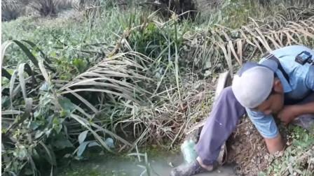 小伙子钓千年黄鳝,手法相当老道,分分钟钓上巨鳝!