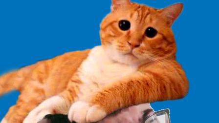 当你在路上看到猫,是不是也会不自觉这样做?