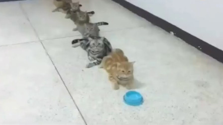 6只猫咪排队领小鱼干,大橘自带饭碗,看到最后一只你别笑