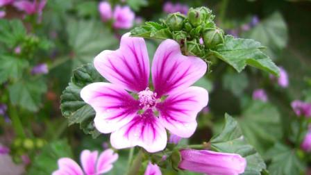 十二星座是哪种野花变成的花仙子?你认识吗?