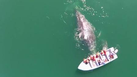 鲸鱼妈妈向人类求助,小鲸鱼痛苦不堪,游客连忙伸出援手
