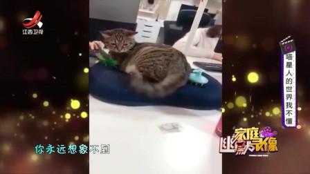 家庭幽默录像:你永远想象不到一只无聊的猫会做什么,今天你就会知道!