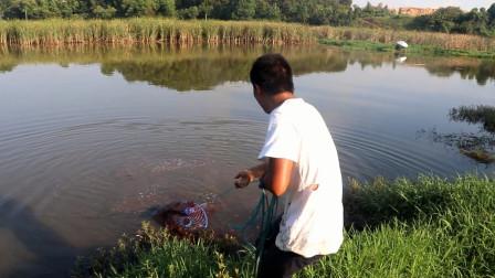 农村野塘到处都是鱼,小邓随手一撒就收获了2条大货,太过瘾了