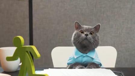 当你沉迷于公务,你家猫主子却闹着要出去玩