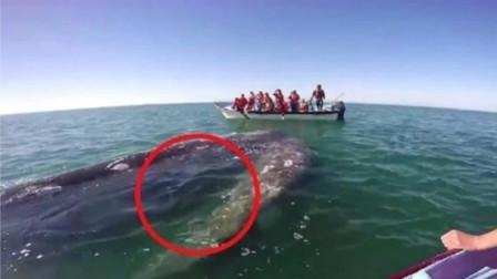 鲸鱼母子向人类求救,当看到鲸鱼身体时,眼眶马上湿润了!