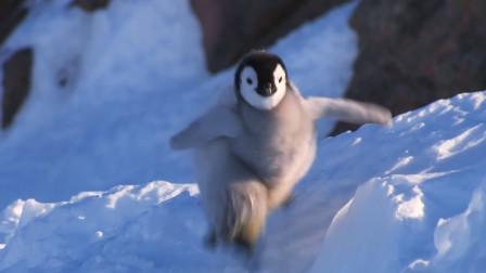 不会摔跤的企鹅,不是好企鹅,摔跤要从娃娃抓起,看一次笑一次